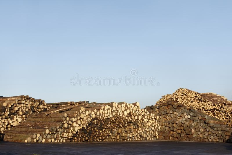 Wood tree logs stacked and chopped against empty clear blue sky stock image
