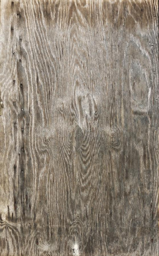 Wood, Tree, Texture, Trunk stock photography