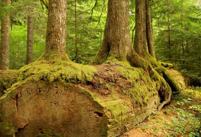 wood trees royaltyfri fotografi