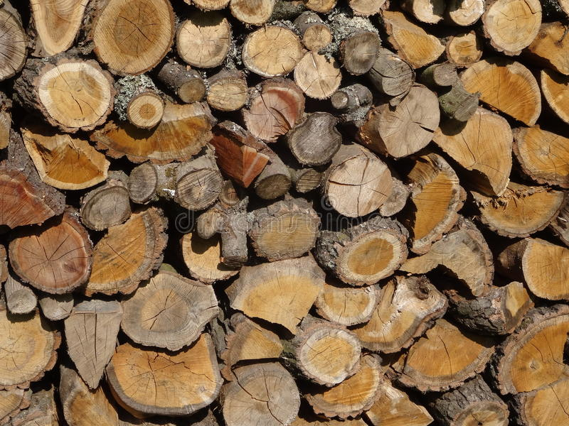 Wood. A trunk. stock images
