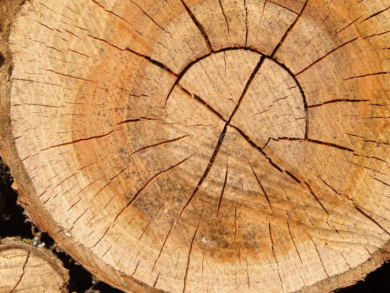 Wood. A trunk. stock image