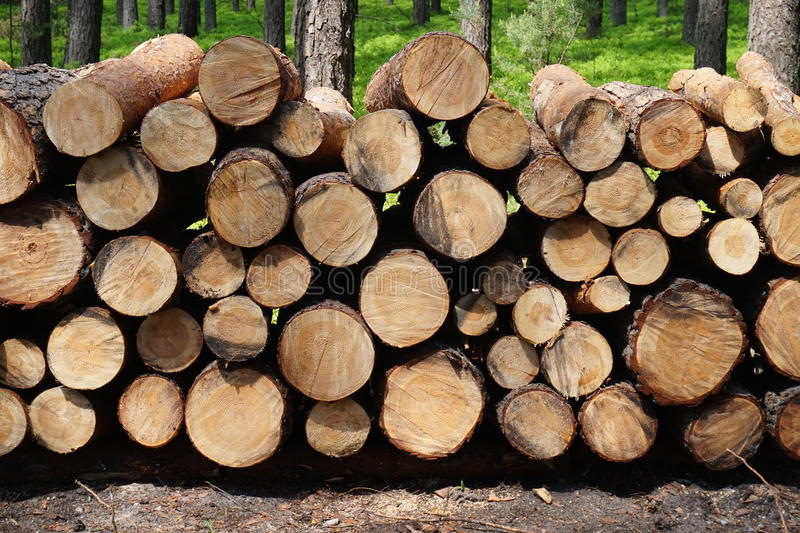 Wood trunks in forest. Stacked logged wood in forest - great for topics like wood as a fuel, forestry etc royalty free stock photos