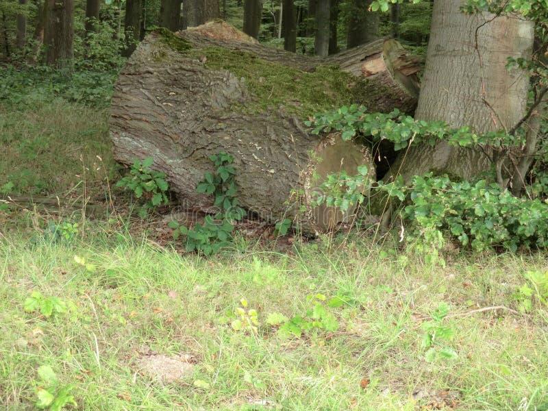 Wood1 imagen de archivo libre de regalías