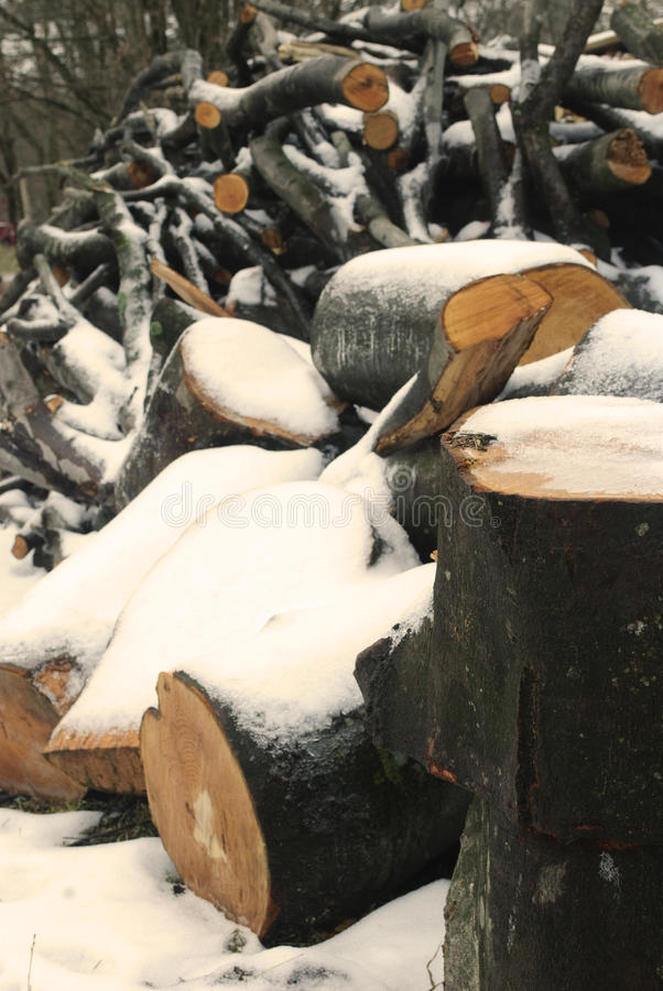 Download Wood under the snow stock image. Image of firewood, environmental - 12681223
