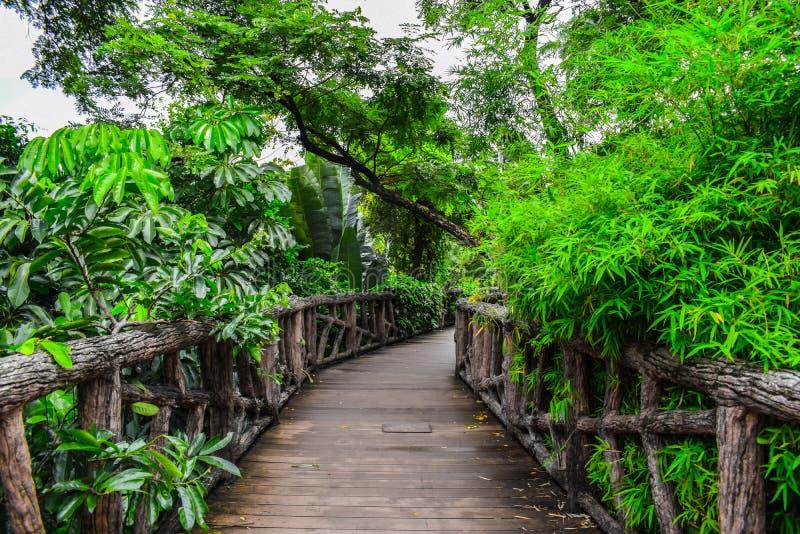 Wood Walkway arkivfoton