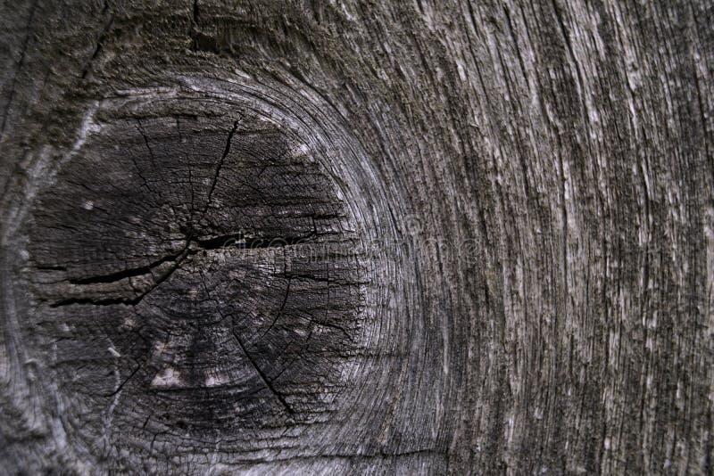 Wood wall texture closeup gray color background. Wood wall texture closeup old gray stock photography