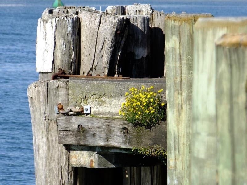 Wood, Water, Window stock image