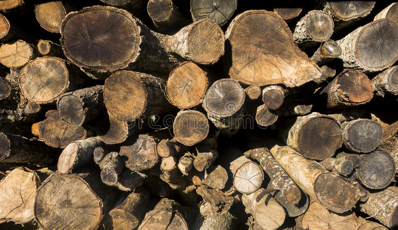 Wood for winter stock photo