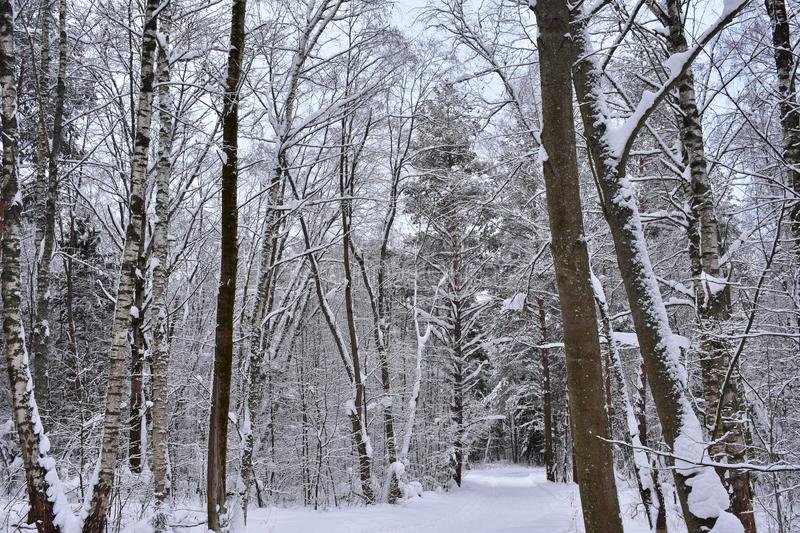 Wood winter snow white, bushy, the road. Sparkles, charms. Is Shining, sparkles. Silver frost shines stock photography