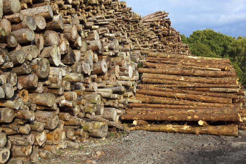 Wood yard with logs. A wood yard with stock piled logs near trees under a blue sky in autumn in yorkshire royalty free stock photos