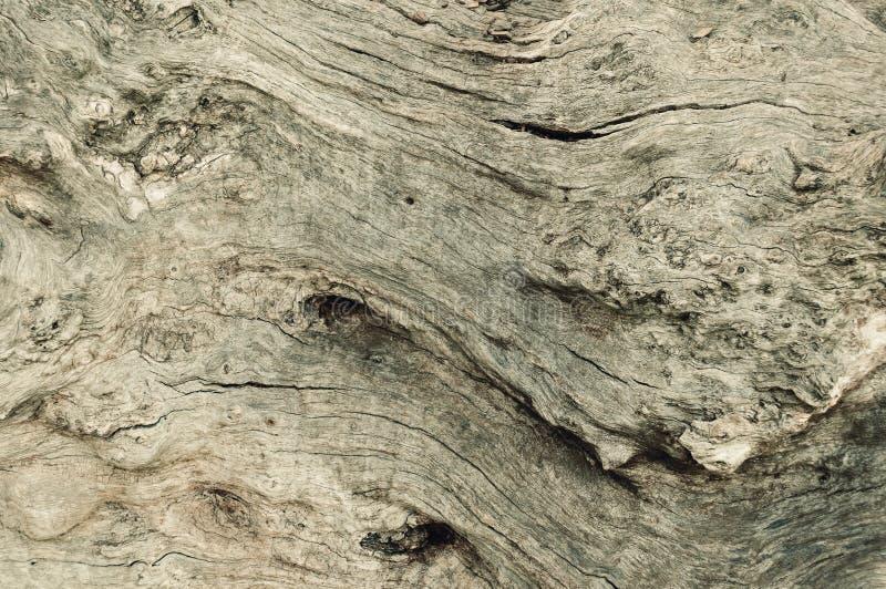 Wood yttersida för textur för bakgrund för yttersidaekskäll gammal royaltyfri fotografi