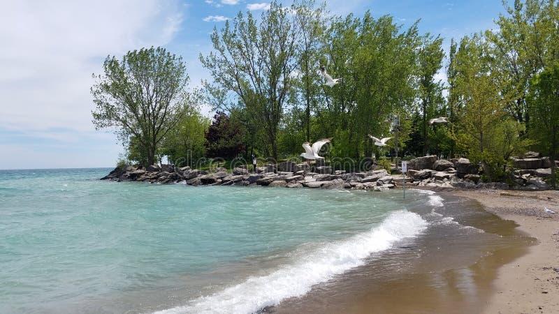 Woodbine beach in Toronto stock photo