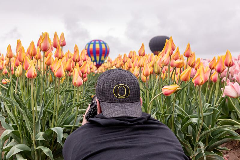 A photo of a man in a baseball hat with `O` sign laying on a tulip field. Woodburn, Oregon \ USA - 21 April 2019: A photo of a man in a baseball hat with `O` stock photography