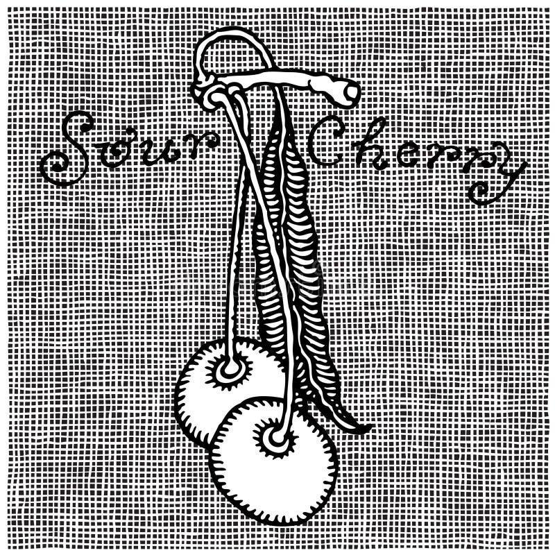 Woodcut da cereja ácida ilustração do vetor