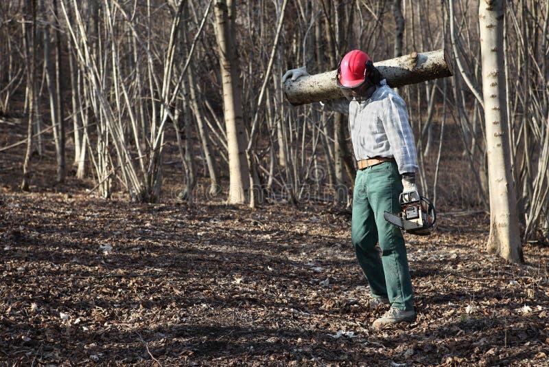 Woodcutter Lumberjack с журналами нося цепной пилы большого дерева внутри стоковое фото
