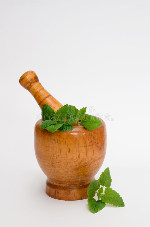 Wooden mortar with melissa leaves stock photography