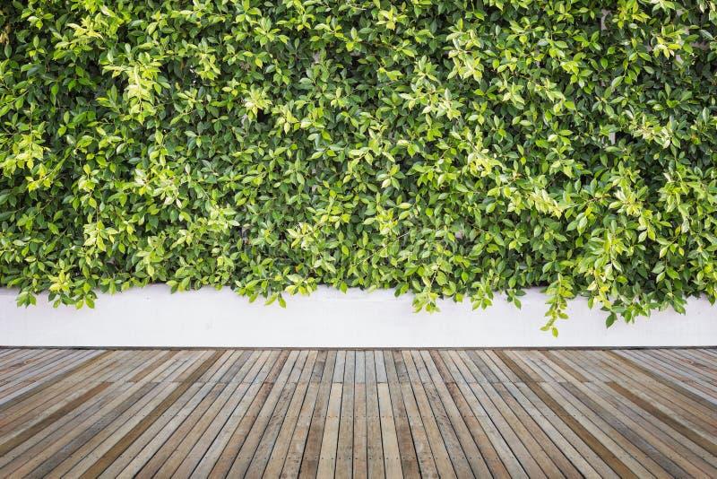 Woodecking o suelo y planta en el jardín decorativo imágenes de archivo libres de regalías