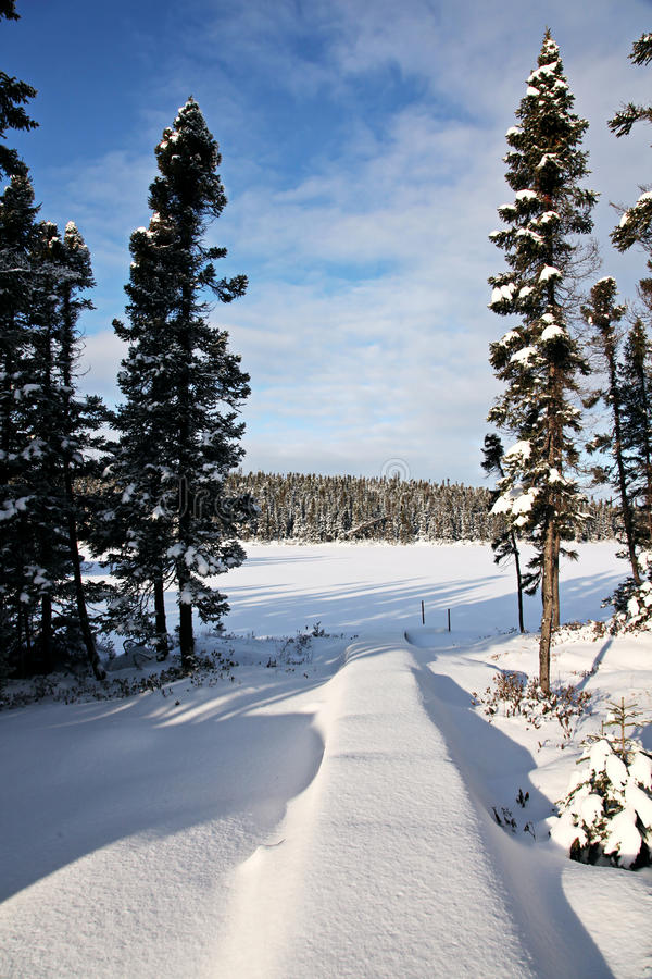 Wooded field in winter stock images