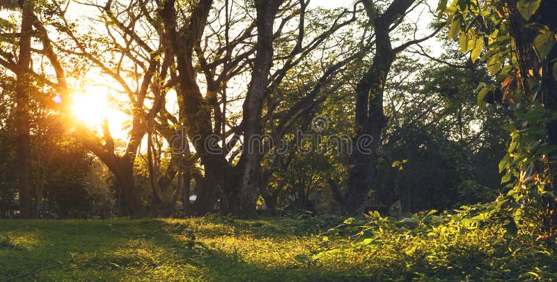 Wooded forest trees backlit by golden sunlight before sunset. royalty free stock photo