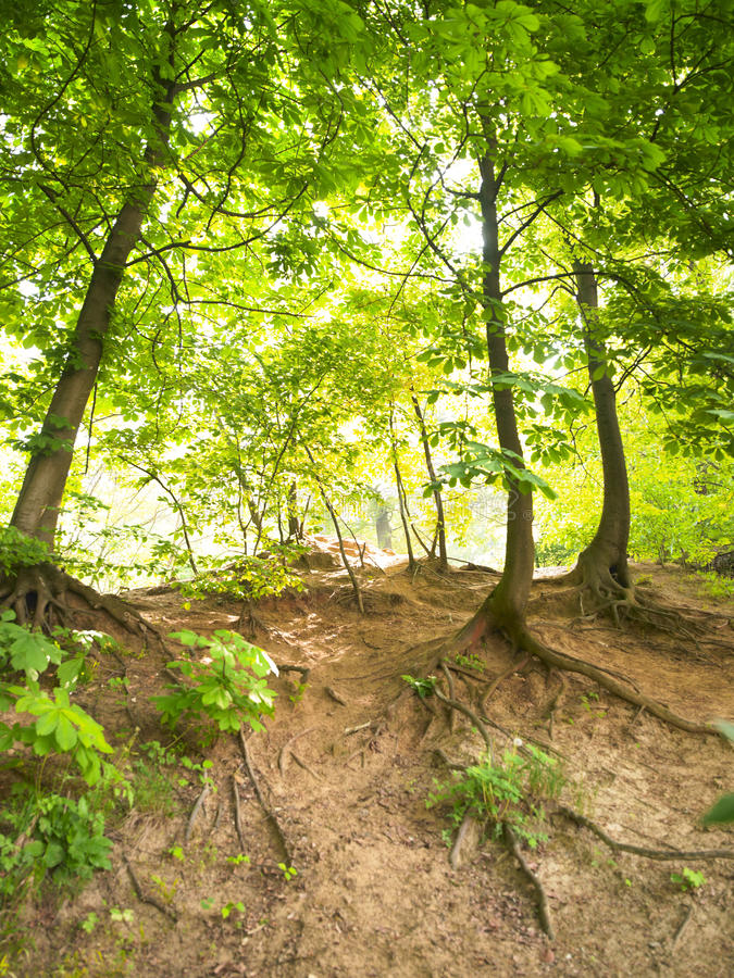 Free Wooded Hillside Stock Images - 12053514