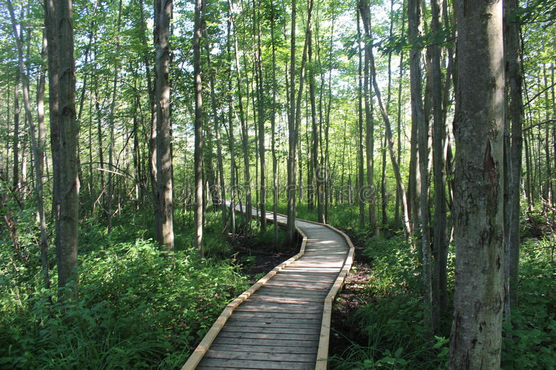 Wooded Path Through a Forest stock photo