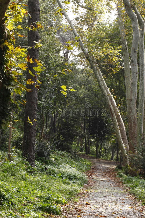 Wooded path. Photographed in daylight avenue views stock photos