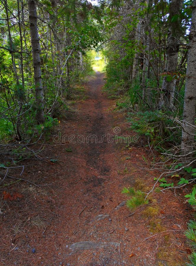 Trail To the Lake. Wooded path at the west end of Suttle Lake near Sisters, OR stock images