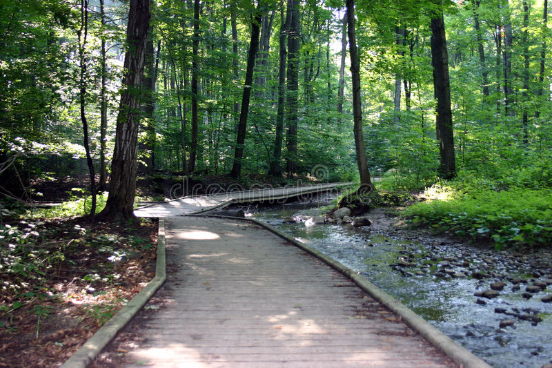 Download Wooded Pathway Through Forest Stock Image - Image of forest, river: 40755
