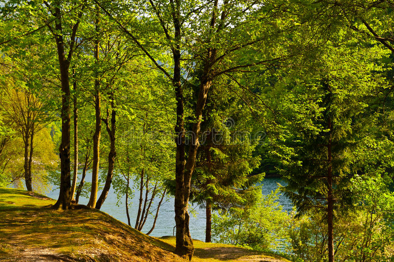 Download Wooded Shore stock photo. Image of europe, country, land - 26023074