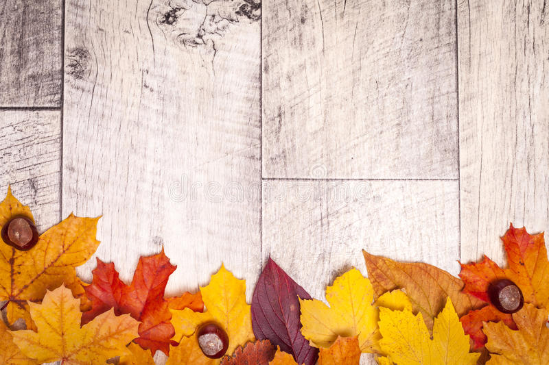 Wooden autumn background with leaves royalty free stock photo