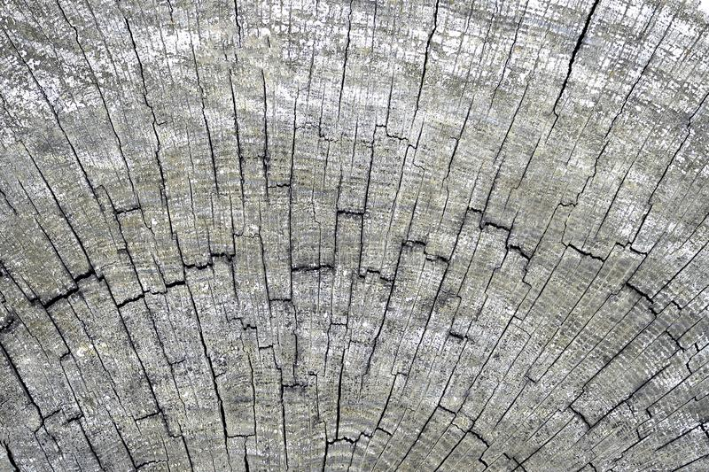 Wooden background of cross-cut old tree trunk cracked by time. Organic texture royalty free stock photos