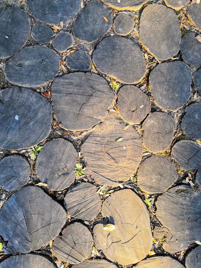 Wooden background. Macro wood cross section. Closeup of round slice of tree with annual rings and cracks stock images