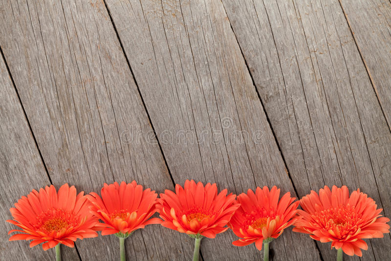 Wooden background with orange gerbera flowers. And copy space stock photo