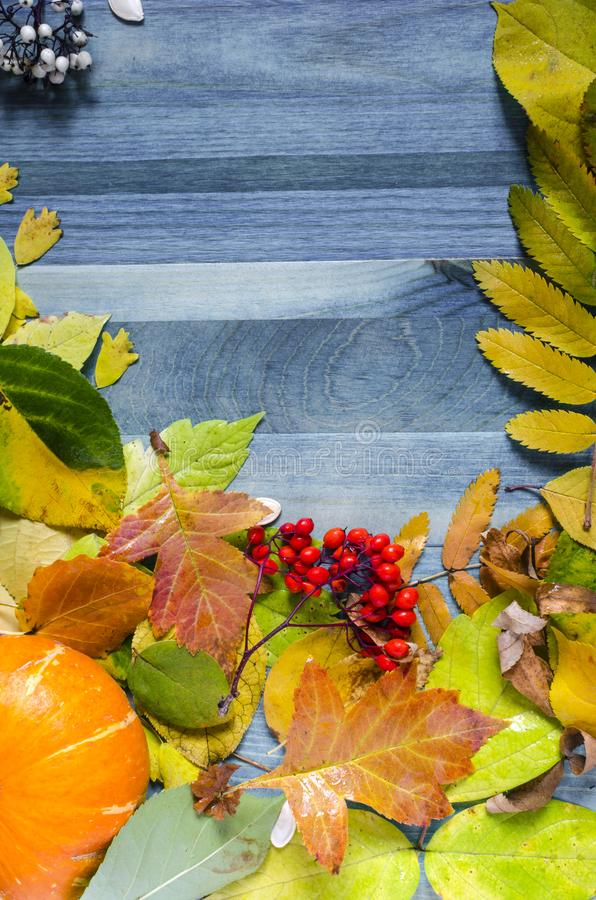 Wooden background with yellow, red and green leaves and berries on blue background vertical. Wooden background with yellow, red and green leaves and berries on royalty free stock photo
