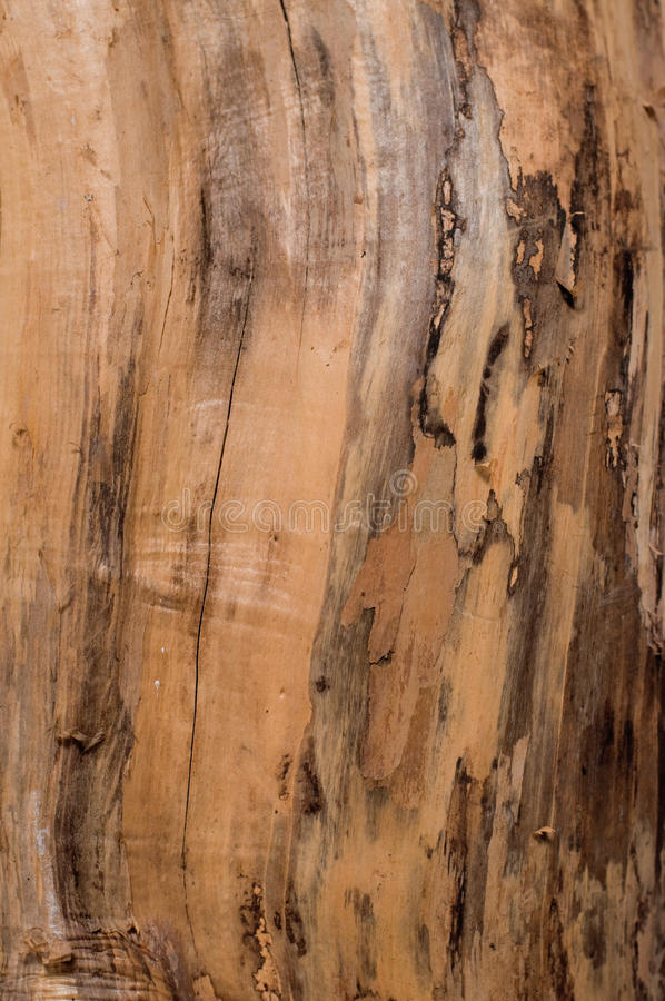 Wooden backgrounds royalty free stock image