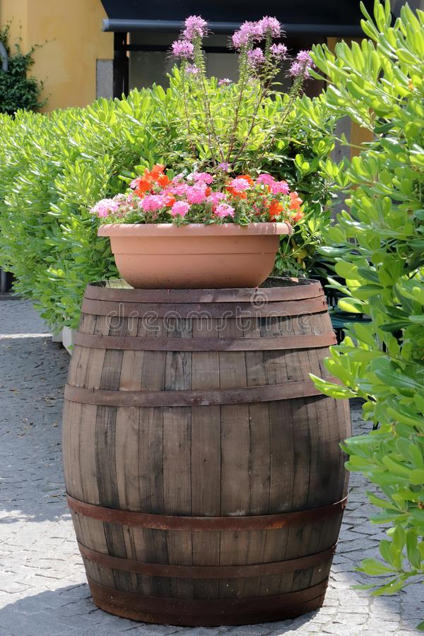Wooden barrel with flowerpot and hedge. In italy stock images