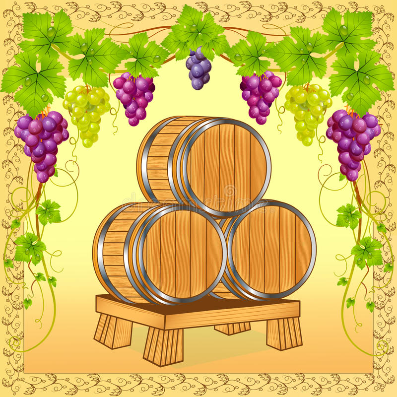 Wooden barrels with wine on  of the grapevine
