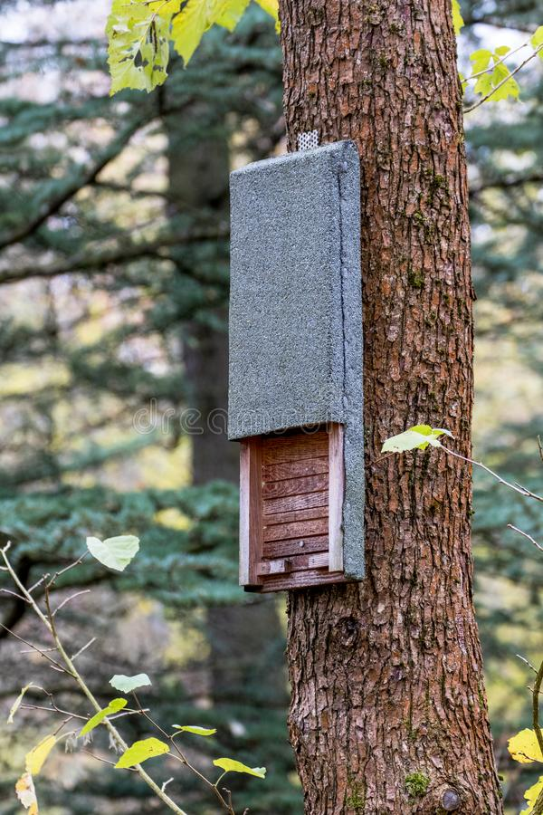 Wooden bat box on a tree royalty free stock images