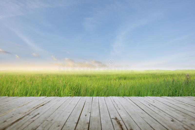 Wooden batten bridge juts out into the expanse of the rice filed and beatiful sky stock image