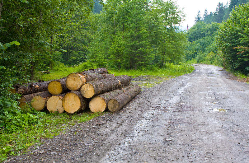 Download Wooden beam store stock image. Image of background, felling - 28180917