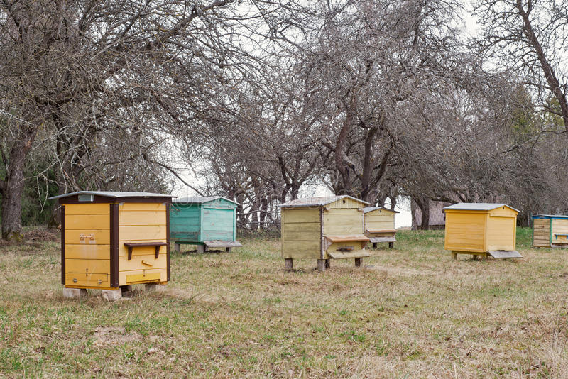 Wooden bee hives in a garden. Colorful wooden bee hives in a garden in early spring royalty free stock photos