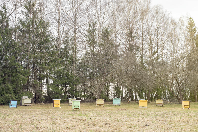 Wooden bee hives in a garden. Colorful wooden bee hives in a garden in early spring stock image