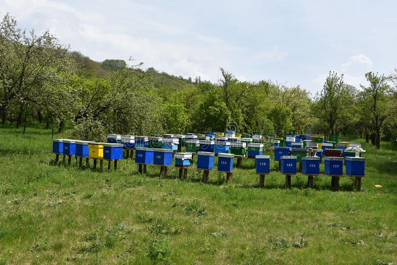 Wooden bee hives on green grass royalty free stock images