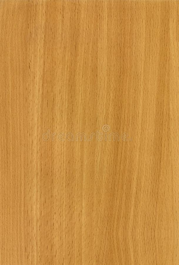 Wooden Beech Bavaria texture stock photo