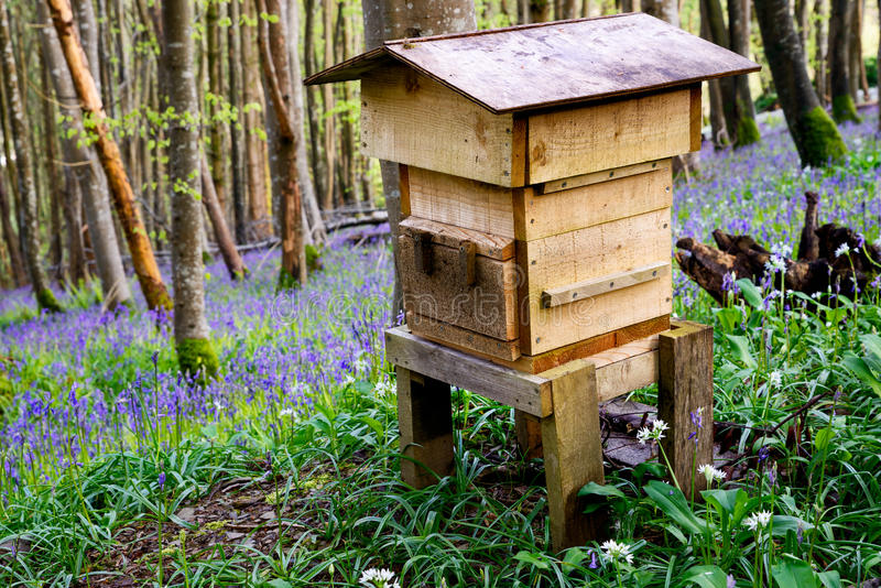 Wooden Beehive. A wooden beehive in beautiful woodland and surrounded by bluebells and wild garlic stock photos