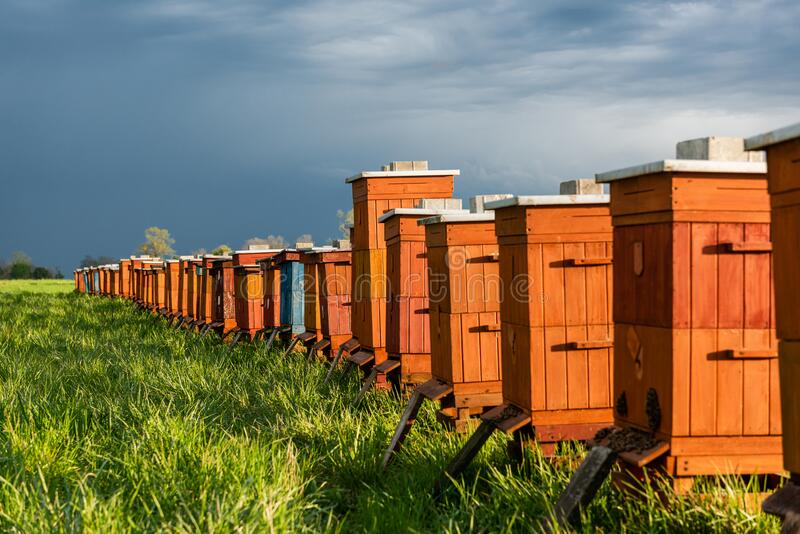 Wooden Beehives in Fields. Bee Producing Bio Honey. Beekeeping Apiculture and Apiary Concept stock photography