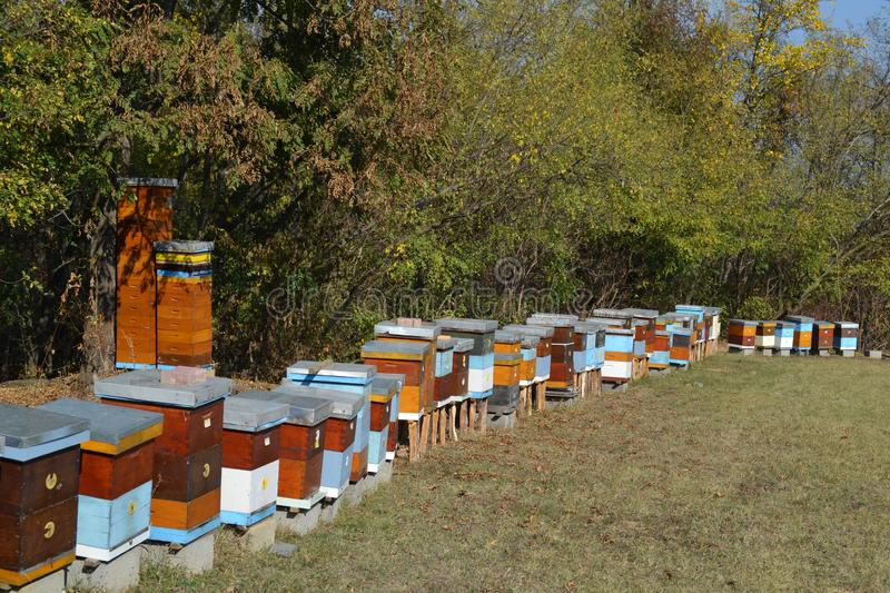 Wooden Beehives on a meadow stock images