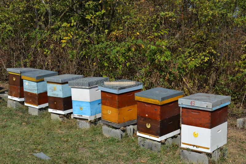 Wooden Beehives on a meadow stock photos