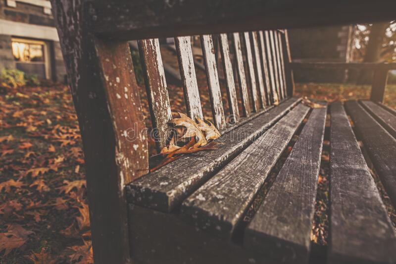 Wooden bench in fall royalty free stock photography