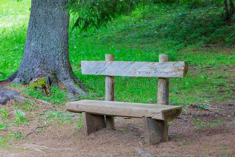 Wooden bench in the forest among coniferous trees and grass royalty free stock photos